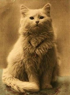 One of the first cat photos ever taken, 1880s