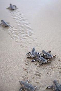 Turtles:)