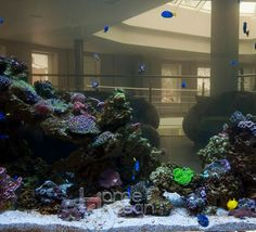 Акриловые аквариумы на заказ Christmas Tree, Ocean, Holiday Decor, Home Decor, Homemade Home Decor, Decoration Home, Xmas Tree, The Ocean, Christmas Trees