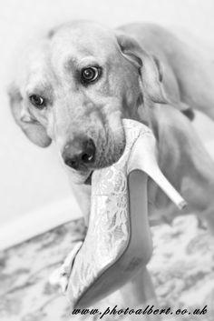 #Bride's favorite #dog helping her get dressed. So adorable