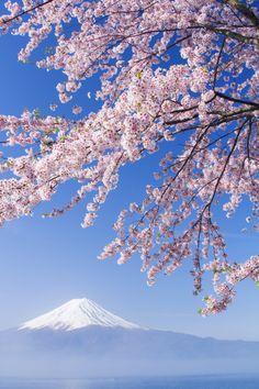 SAKURA Mt.Fuji by Hiroki Morita / 500px