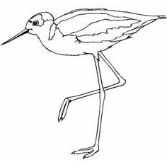 Sandpiper On One Leg Printable Coloring Page Free To Download And Print Coloring Pages Watercolor Bird Sandpiper