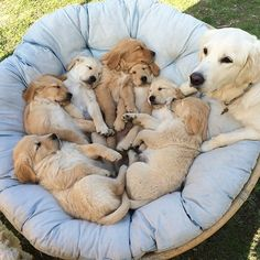 Things that make you go AWW! Like puppies, bunnies, babies, and so on. Cute Dogs And Puppies, Baby Puppies, Pet Dogs, Dog Cat, Doggies, Cute Funny Animals, Cute Baby Animals, Animals And Pets, Dog Charities