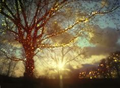 simple twinkle lights gild a backyard tree in dazzling gold.
