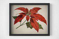 Poinsettia Flower art print Botanical printable art