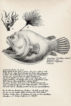 Every Day Deep Sea Creature illustrations by Jared Muralt. This guy gets it- strange fish are incredibly fun to draw Deep Sea Creatures, Etching Prints, Angler Fish, Deep Sea Fishing, Nature Illustration, Sea Monsters, Fauna, Wildlife Art, Natural History