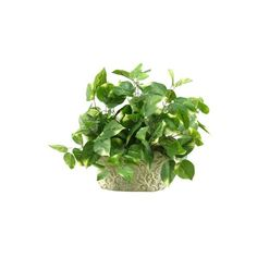 Pothos Ivy in Oblong Ceramic Planter ($30) ❤ liked on Polyvore featuring home, home decor, floral decor, plants, flowers / foliage, green, artificial flowers, decorative accents, flower stem and fake flower bouquets