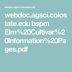 webdoc.agsci.colostate.edu bspm Elm%20Cultivar%20Information%20Pages.pdf Small Trees, Pdf, Backyard, Patio, Backyards