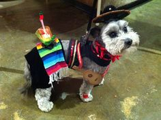 Mariachi Ruffito Bandito. Made guitar out of foam paper, added ribbon for strap attached in back with duct tape or glue. Serape is a bottle cover. plastic shot glass with straw taped in with pepper pick . sequence glitter ribbon glued on harness. plastic pepper stretch bracelet for necklace, poms sewed onto small ponytail holders to make anklets. hat attached to Velcro head harness with elastic