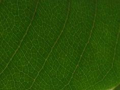 green_leaf_pattern.jpg (1600×1200)