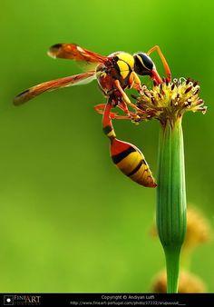 # Wasp