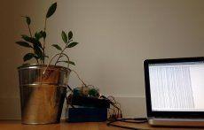 Regar automáticamente sus plantas con sensores, una Raspberry Pi y webhooks - Raspberry Pi