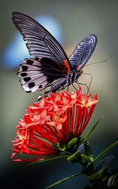 flowersgardenlove:  Butterfly Feeding on Beautiful gorgeous pretty flowers