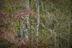 10 Virtues of Good Deer Hunters | Patience, persistence, optimism and more can make you a better person — and a more successful hunter, too