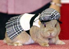 Resultado de imagen para ropa para conejos domesticos