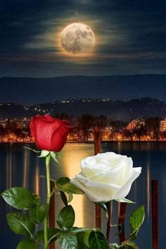 sending my love mum and looking for you in heaven⚘ Lip Wallpaper, Apple Logo Wallpaper Iphone, Beautiful Moon, Beautiful Roses, Roses Gif, Good Night Messages, Moon Images, Good Night Sweet Dreams, Night Wishes