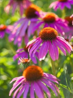 Plant these low-maintenance perennials and shrubs—including hostas, peonies, yarrow, daylilies, catmint and switchgrass—for a carefree Midwest garden.