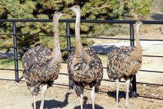 Rolling Hills Wildlife Adventure, Zoo