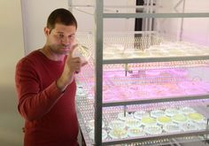 Israeli hi-tech super algae can power a green energy revolution. // The goal is to domesticate wild species of micro-algae, just as man domesticated wild wheat for his needs. //