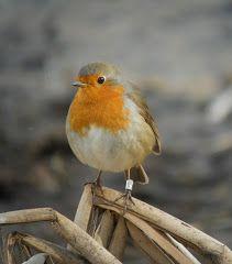 Loja Wildlife, Granada Province, Spain. Bird Watching, Granada, Wild Flowers, Spain, Wildlife, Birds, Tours, Animals, Animales