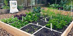 Makkelijke Moestuinbakken: vlak bij het huis Vegetable Garden, Outdoor Structures, Vegetables, Plants, Diy, Secret Gardens, Craft Ideas, Gardening, Fruit