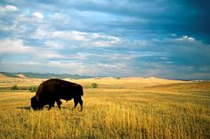 The 10 Places in the US You Absolutely Have to Visit in 2015: Western South Dakota-always a favorite destination