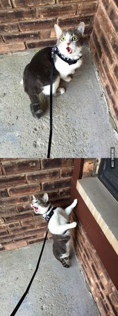 She took her indoor cat outside for the first time