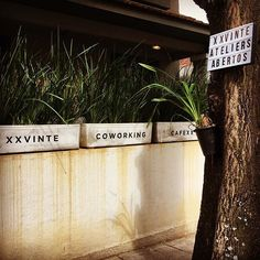 sabado é dia daquele passeio gostoso pelo jardim botanico.. #ifyoulovemeletmeknow #coworking #colabore @helenapontes @_anaporto_ @kryastore @kuhnstore @vettori.art Co Working, Sidewalk