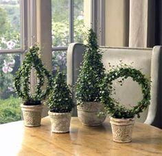 Ivy topiaries, angel vine topiaries, rosemary topiaries, boxwood topiaries, myrtle topiary and lavender topiary.