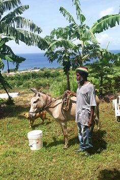 """Meet The Rastafari Community Of St. Kitts For the Gideon Force Group in St. Kitts, the Rastafari movement is more than a religious conviction or ideology; it's a way of life. This group is dedicated to """"sharing Rastafari and natural farming to serve and nourish the physical and spiritual wellbeing of all people."""" They began welcoming visitors and/or volunteers to their organic farm outside of Basseterre to spread their message of One Love."""