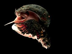 Strange Deep Water Creatures   Exotic creatures discovered living at deep-sea vent in Indian Ocean ...