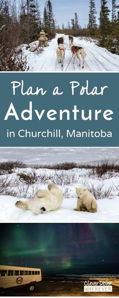 As I try to stay warm on my Churchill Manitoba trip, I discover that the people of this tundra town spread warmth with their fiery spirit.  Canada Travel  Zougang zu eiser Site Méi Informatioun  http://storelatina.com/canada/travelling #viajecanada #Canadatravel #viagemcanada #Kanadareisen