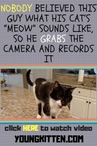 Nobody Believed This Guy What His Cat S Meow Sounds Like So He Grabs The Camera And Records It Cats Kittens Cute Cats Kittens Kittens
