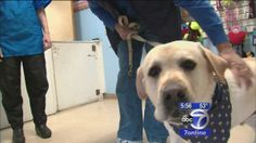 New Jersey dog that went missing 17 months ago reunited with family