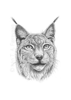 Get inspired by amazing drawing projects on Craftsy! - Page 41 Easy Drawings Sketches, Animal Sketches, Pencil Art Drawings, Animal Drawings, Different Forms Of Art, Animal Graphic, Eurasian Lynx, Drawing Projects, Anatomy Art