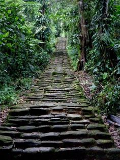 Amazon Rainforest, Colombia