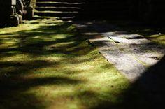 Moss Carpet by Sakashi Yui on 500px