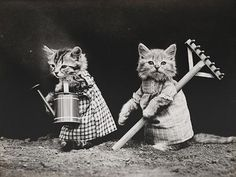 Century-Old Photographs of Adorable Cats and Dogs / Photos