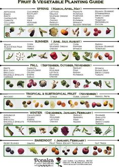 When to plant vegetables. Perfect for our soon to be new vegetable garden along the side of the house When to plant vegetables. Perfect for our soon to be new vegetable garden along the side of the house Veg Garden, Edible Garden, Garden Plants, When To Plant Garden, Spring Vegetable Garden, Garden Pool, Garden Art, Urban Gardening, Organic Gardening