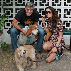 George Clooney et Amal Clooney ont un nouveau bébé | HollywoodPQ.com