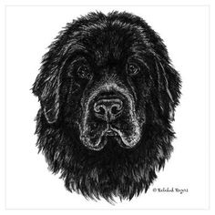 Newfoundland Dog Drawing - Bing Images