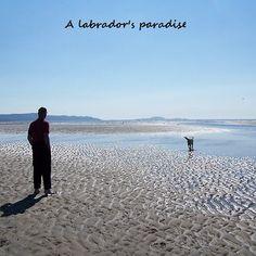 A labrador's paradise Labrador, Paradise, Beach, Water, Outdoor, Photography, Gripe Water, Outdoors, Seaside