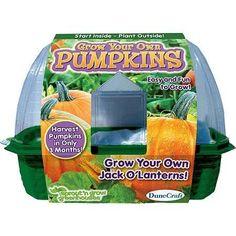 Buy DuneCraft Grow Your Own Pumpkins at Walmart.com