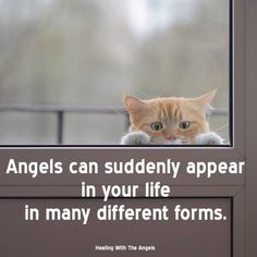 """Angels can show up in physical form, such as a stray animal who becomes a life-changing beloved pet, or a helpful stranger who suddenly appears and then disappears without a trace. Has this ever happened to you?  """"Be careful when entertaining strangers, for thereby some have entertained angels unawares."""" One of my favorite quotes from the book of Hebrews -- in modern language it means, """"When you meet a stranger, be courteous, as you might be meeting an angel."""" DV444"""