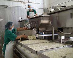 Situada en la comarca de Stymfalia, en Corintia, esta quesería regentada ahora en tercera generación no solo produce feta -unas 500 toneladas al año- sino también el famoso yogur griego, aunque en su variante de oveja, así como otros quesos autóctonos.