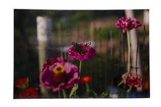 Zdjęcie na piance #walldecor #flowers #photoart #print #livingroom #ideas #pianka #odbitki #zdjecia