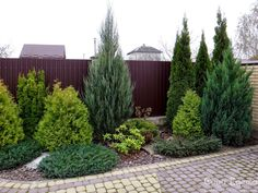 60 Beautiful Front Yards And Backyard Evergreen Garden Design Ideas - Gartengestaltung Evergreen Landscape, Evergreen Garden, Privacy Landscaping, Front Yard Landscaping, Landscaping Ideas, Arborvitae Landscaping, Florida Landscaping, Outdoor Landscaping, Backyard Ideas