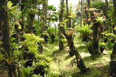Jardin de Balata, Martinique