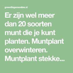 Er zijn wel meer dan 20 soorten munt die je kunt planten. Muntplant overwinteren. Muntplant stekken. Hoe doe je dat. Wanneer snoeien. Lees meer.. .