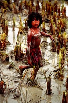 pakizah:  When the rice is cut, men and boys fish for magur in the muddy water. This girl's job is to spot the silver fish.  Dhaka, Bangladesh Ian Berry